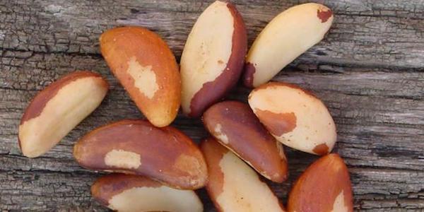 meilleure noix à manger pour perdre du poids