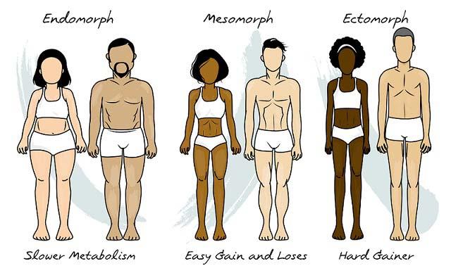 Quelle est ma morphologie ? Mésomorphe, endomorphe ou ectomorphe?