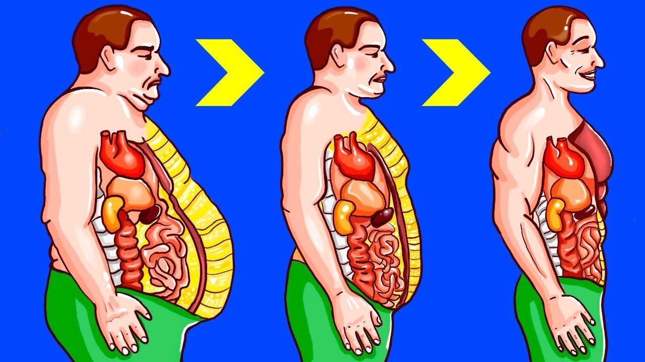 meilleures techniques de combustion de la graisse du ventre perte de poids Douglas Cork