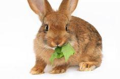 nourrir le lapin pour perdre du poids