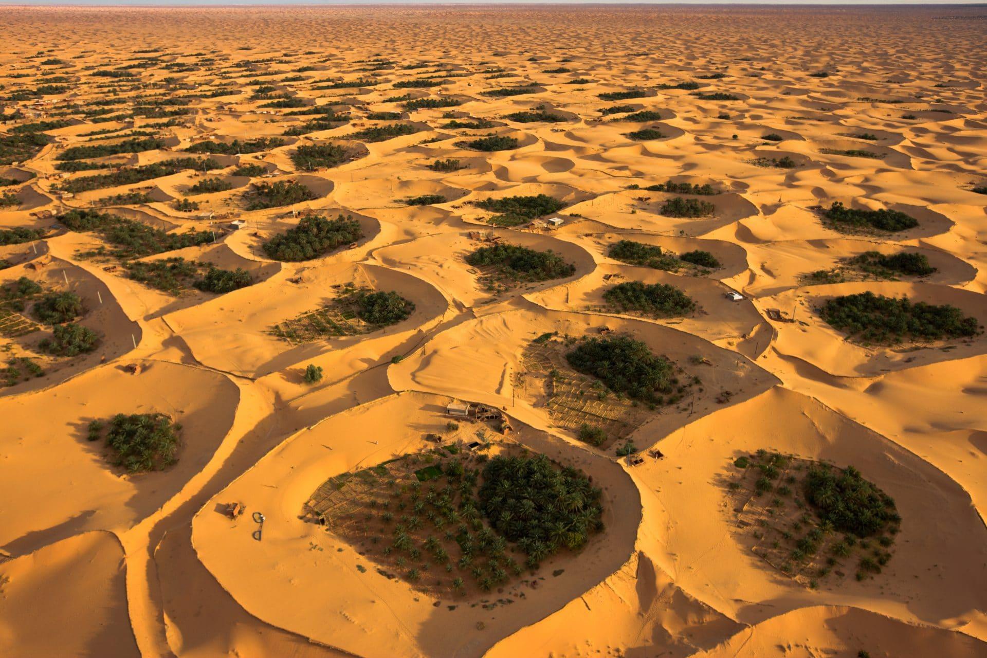 aspirer à la perte de poids du désert de palmiers comment brûler les graisses même en dormant