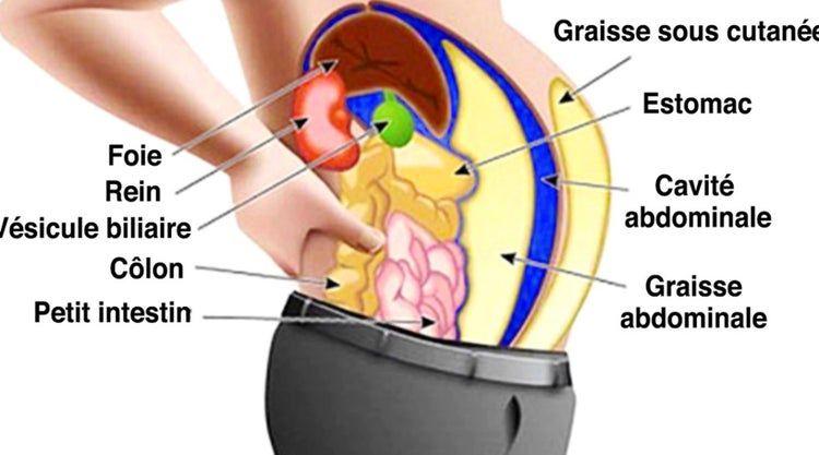 comment perdre de la graisse dans les organes