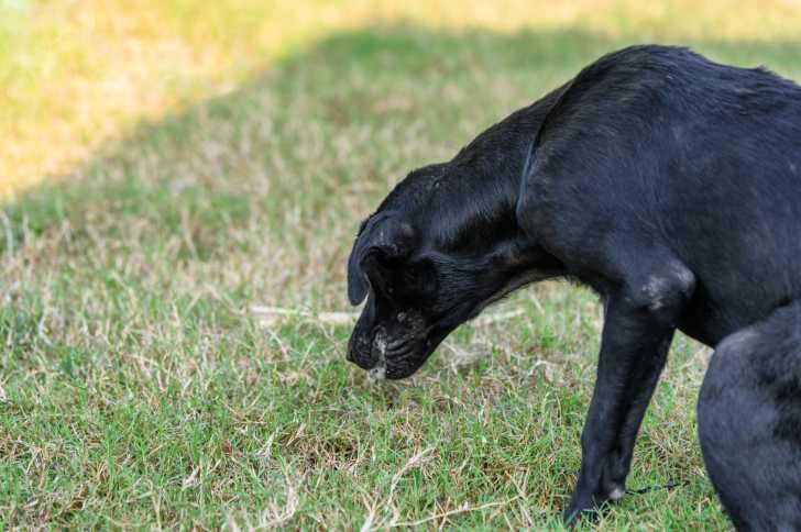 perte de poids de lymphome canin