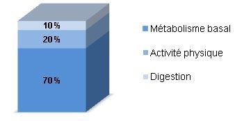 le métabolisme augmente perdre du poids