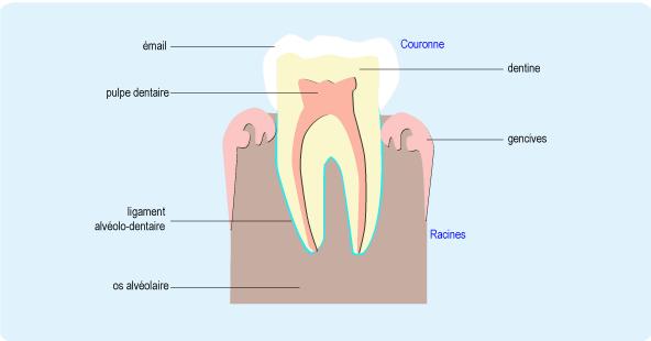 perte de poids après avoir obtenu des prothèses dentaires