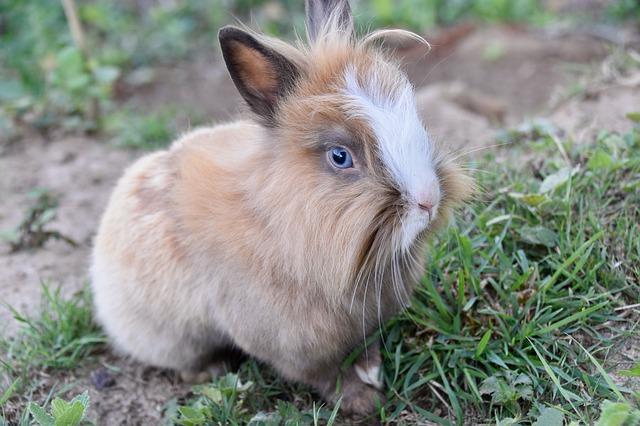 perte de poids de lapin nain comment perdre la graisse de la jambe femme