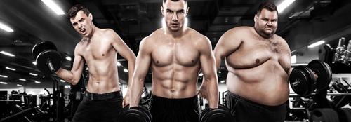 Développement musculaire et morphotypes